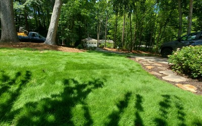 What is the Best Variety of Zoysia for my Lawn in North Carolina?