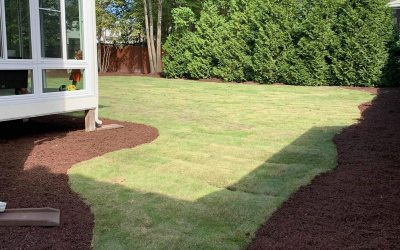 Is It Cheaper To Lay Sod Than To Seed Fescue?