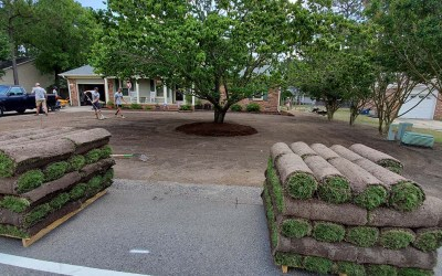 What To Look For When Choosing A Sod Installation Company