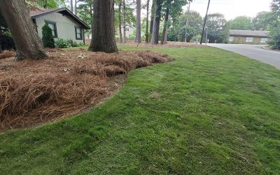 4 Best Grass Types for Your Lawn in Apex, NC